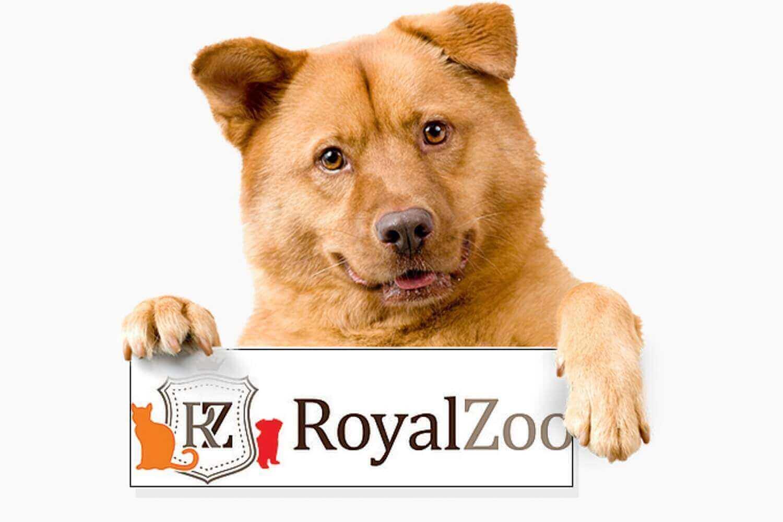 royalzoop продвижение